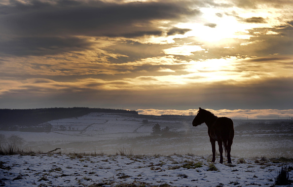 Horse「Freezing Temperatures Continue In Northern Ireland」:写真・画像(18)[壁紙.com]