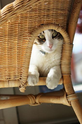 Kitten「Cat sitting on a wicker chair」:スマホ壁紙(4)