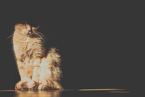 Obscured Face「Cat sitting on floor in shadows」:スマホ壁紙(10)