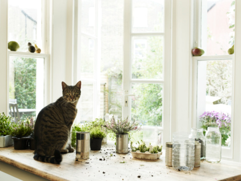 Horticulture「Cat sitting by potting plants」:スマホ壁紙(11)