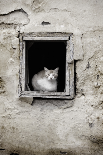 Remote Location「Cat Sitting in Old House Window Frame」:スマホ壁紙(12)