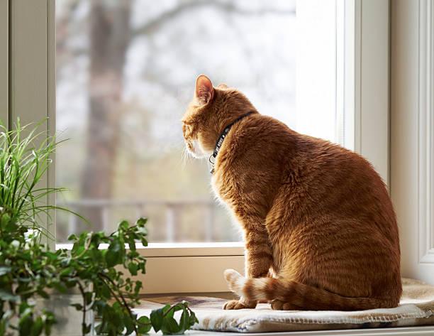 Cat sitting on window sill looking through window:スマホ壁紙(壁紙.com)