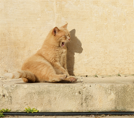Yawning「Cat sitting on a wall yawning」:スマホ壁紙(15)