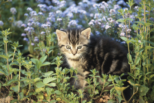 Kitten「Cat sitting in garden, close-up」:スマホ壁紙(14)