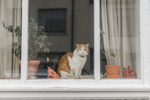 Cat「Cat sitting behind window of a residential house」:スマホ壁紙(15)