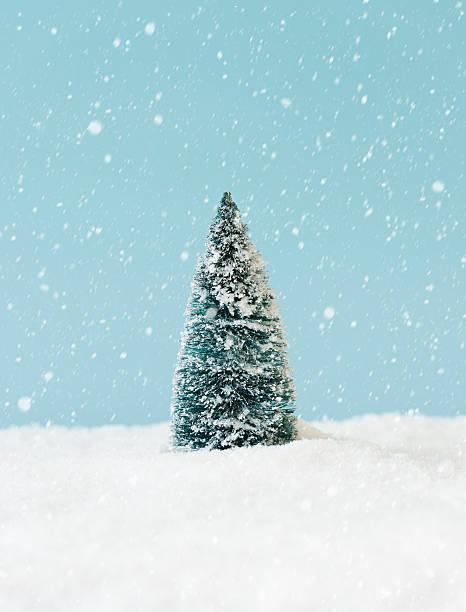 Pine tree covering by snow, studio shot:スマホ壁紙(壁紙.com)