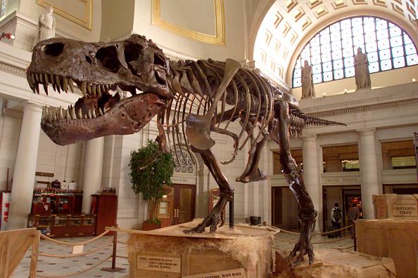 Dinosaur「Sue the Tyrannosaurus Rex on Display in Washington D.C.」:写真・画像(2)[壁紙.com]