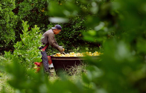 Orange - Fruit「Florida Citrus Production To Be Among Worst In A Decade」:写真・画像(13)[壁紙.com]