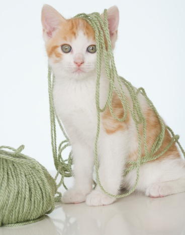 子猫「Kitten covered in yarn」:スマホ壁紙(14)