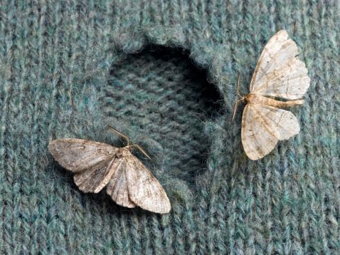 Wool「Moths on Wool Sweater」:スマホ壁紙(7)