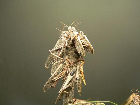 Pasture「locusts」:スマホ壁紙(11)