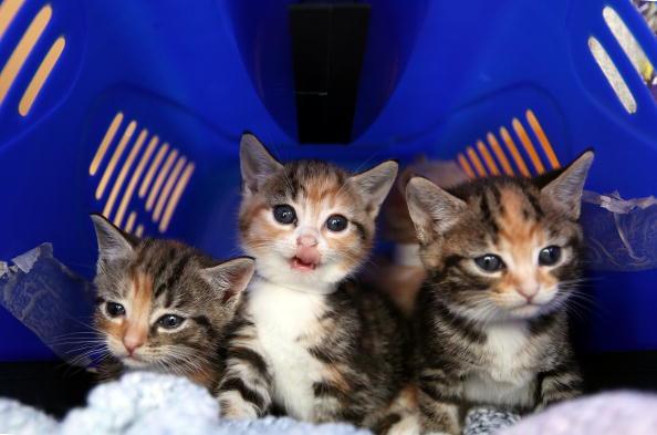 Kitten「Cat Emergency At Battersea As Fewer Prospective Owners Come Forward」:写真・画像(5)[壁紙.com]