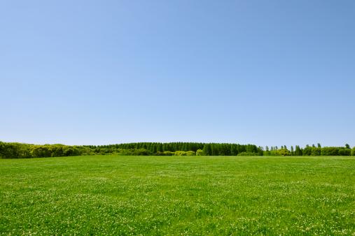 春「Trees in a field, Tokyo Prefecture, Honshu, Japan」:スマホ壁紙(16)