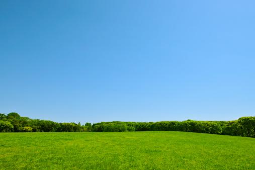 春「Trees in a field, Tokyo Prefecture, Honshu, Japan」:スマホ壁紙(9)