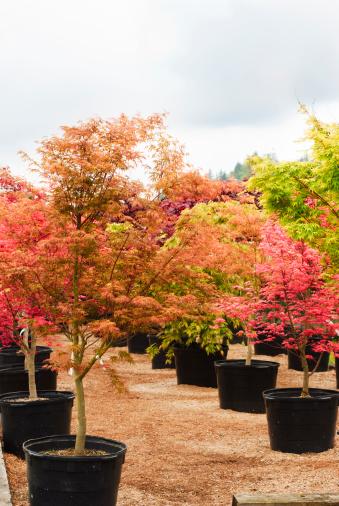 Garden Center「Trees in a Nursery」:スマホ壁紙(19)