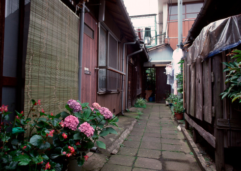 あじさい「Back Street」:スマホ壁紙(14)