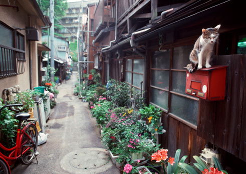 Cat「Back Street」:スマホ壁紙(4)