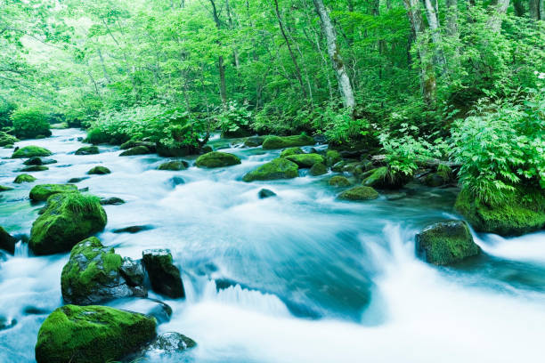 Mountain Stream Flow Through Moss Covered Rocks in the Morning:スマホ壁紙(壁紙.com)