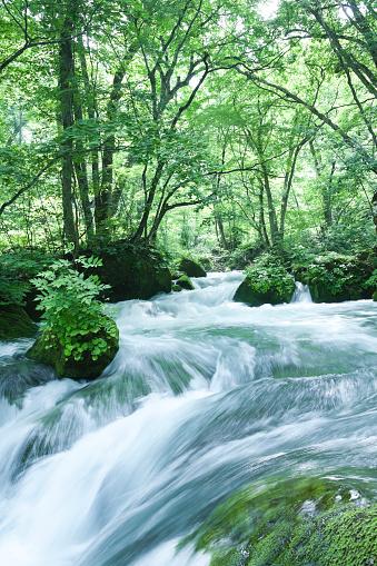 Japan「渓流の流れる緑豊かな林の植物」:スマホ壁紙(9)