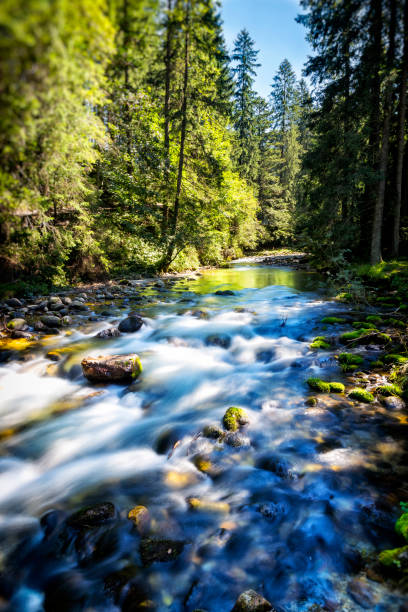 Mountain stream in the Koscieliska valley, Tatra Mountains, Poland:スマホ壁紙(壁紙.com)