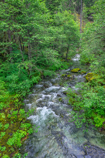 ウィラメット国有林「Mountain stream in lush forest, Battle Ax Creek, Opal Creek Scenic Recreation Area in Willamette National Forest, Oregon, USA」:スマホ壁紙(2)