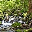 マウントフッド国有林壁紙の画像(壁紙.com)