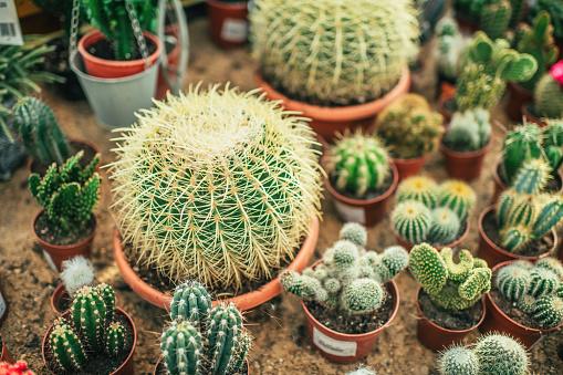 Needle - Plant Part「Succulents in a garden center」:スマホ壁紙(2)
