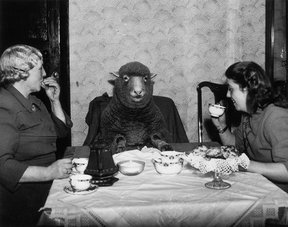 Humor「Lamb For Tea」:写真・画像(16)[壁紙.com]