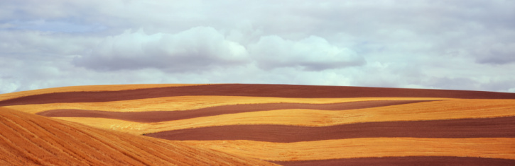 Contour Drawing「Contour with stripes of plowed fields and grain」:スマホ壁紙(14)
