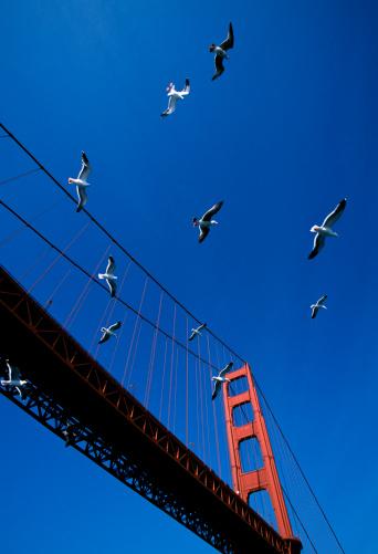 2002「Golden Gate Bridge」:スマホ壁紙(15)