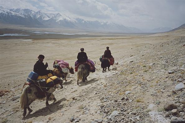 Wild Cattle「Yak Riders」:写真・画像(16)[壁紙.com]