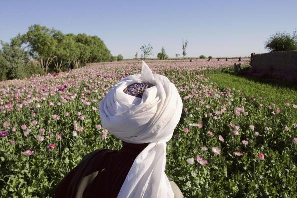 Plowed Field「Afghan and US Teams Fight Opium Trade In Helmand Province Of Southern Afghanistan」:写真・画像(14)[壁紙.com]