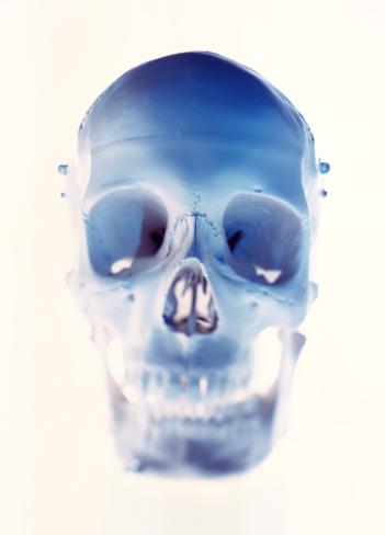 ドクロ「structure of a human skull」:スマホ壁紙(16)