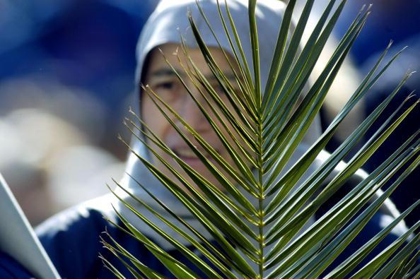 Frond「Pope Hosts Palm Sunday Service」:写真・画像(11)[壁紙.com]