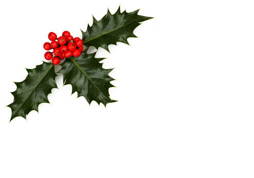 Rowanberry「Three holly leaves, holly berries and copy space」:スマホ壁紙(19)