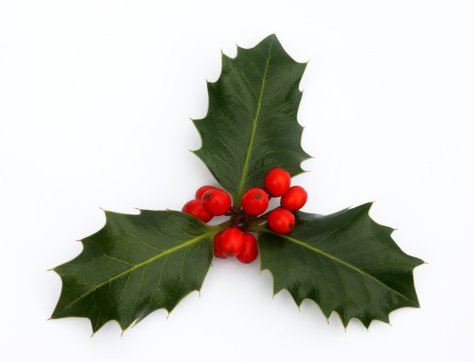Christmas「Three holly leaves with red berries.」:スマホ壁紙(18)