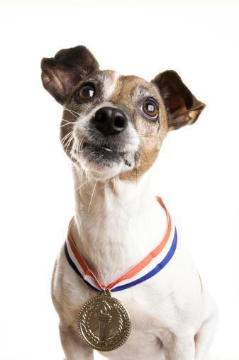 Three Quarter Length「Champion Dog」:スマホ壁紙(17)
