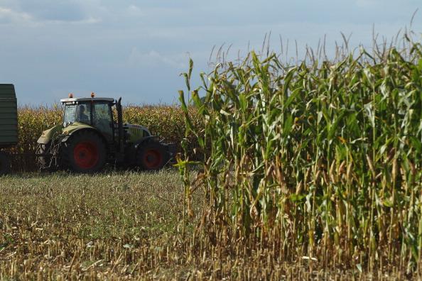 Tractor「Corn Harvest Underway In Brandenburg」:写真・画像(2)[壁紙.com]