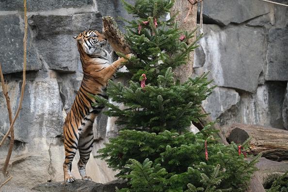 Animal「Animals Snack On Post-Christmas Delights At Berlin Zoo」:写真・画像(5)[壁紙.com]