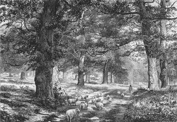 1870-1879「In Sherwood Forest」:写真・画像(14)[壁紙.com]