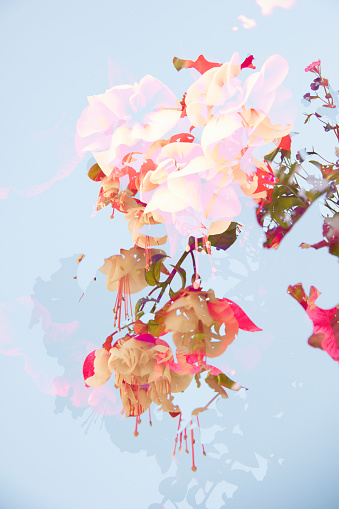 Multiple Exposure「Multiple Exposure image of Cultivated Flowers」:スマホ壁紙(4)