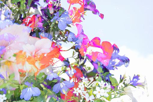 Multiple Exposure「Multiple Exposure image of Cultivated Flowers」:スマホ壁紙(14)