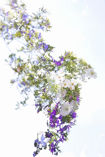 Multiple Exposure「Multiple Exposure image of Cultivated Flowers」:スマホ壁紙(15)