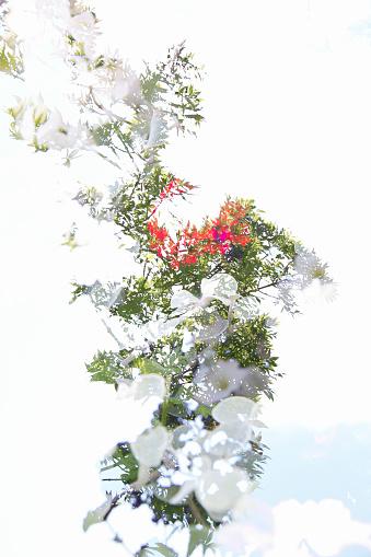 Multiple Exposure「Multiple Exposure image of Cultivated Flowers」:スマホ壁紙(13)
