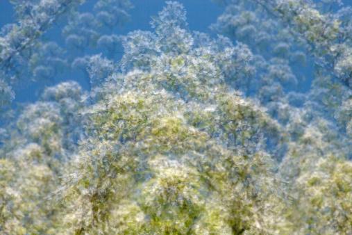 Multiple Exposure「Multiple exposure, pear tree blossoms」:スマホ壁紙(17)