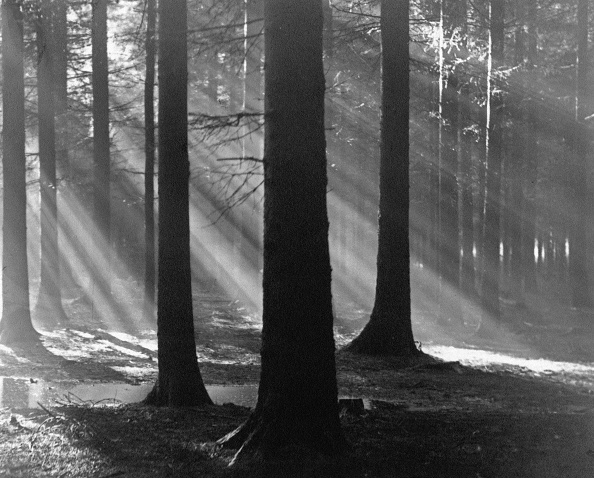 Grove「Sunbeams」:写真・画像(17)[壁紙.com]