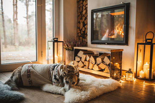 Log「Dogs winter day」:スマホ壁紙(13)