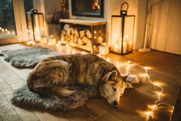 Dogs winter day:スマホ壁紙(壁紙.com)