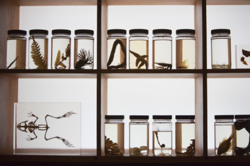 Specimen Holder「Flora and fauna  specimens preserved in jars」:スマホ壁紙(17)