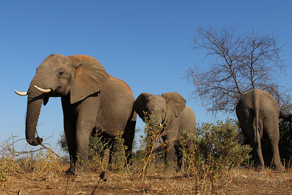 Botswana「An African Safari」:写真・画像(4)[壁紙.com]